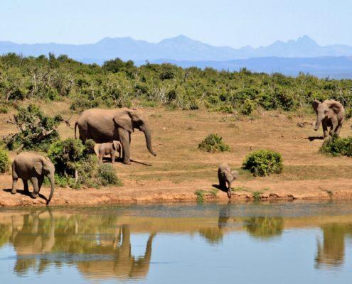 Executive Team Building Elephant